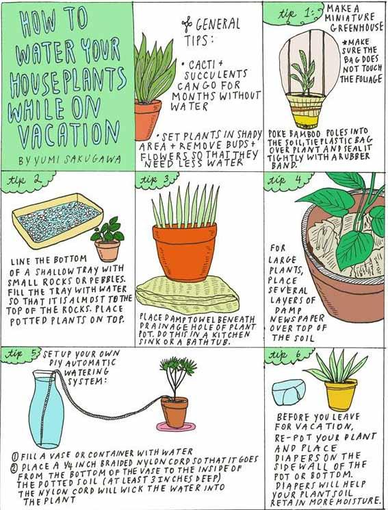Vakantie Wat Doen We Met De Planten Mooi Wat Planten Doen