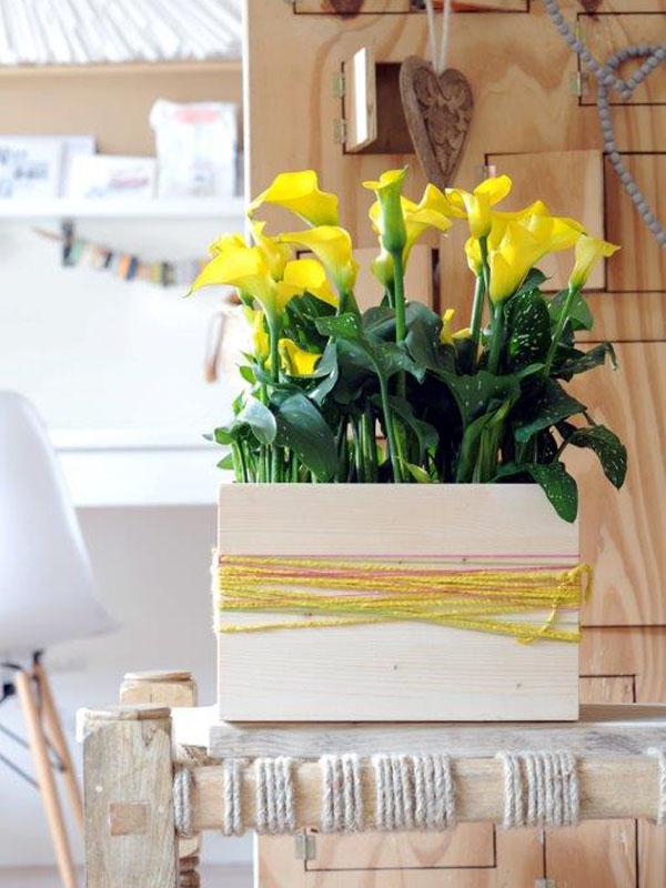 les soins pour votre calla ma plante mon bonheur. Black Bedroom Furniture Sets. Home Design Ideas