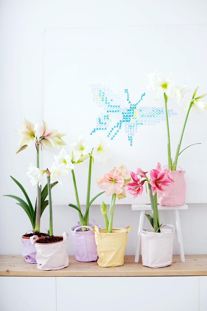 Bollen Voor Binnen Mooi Wat Planten Doen