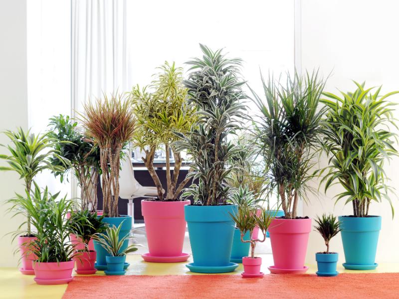 5 kamerplanten die chemische stoffen verwijderen mooi wat planten doen. Black Bedroom Furniture Sets. Home Design Ideas