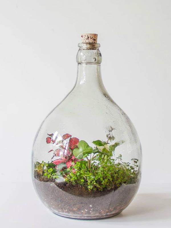 flessentuinen  groen in een fles