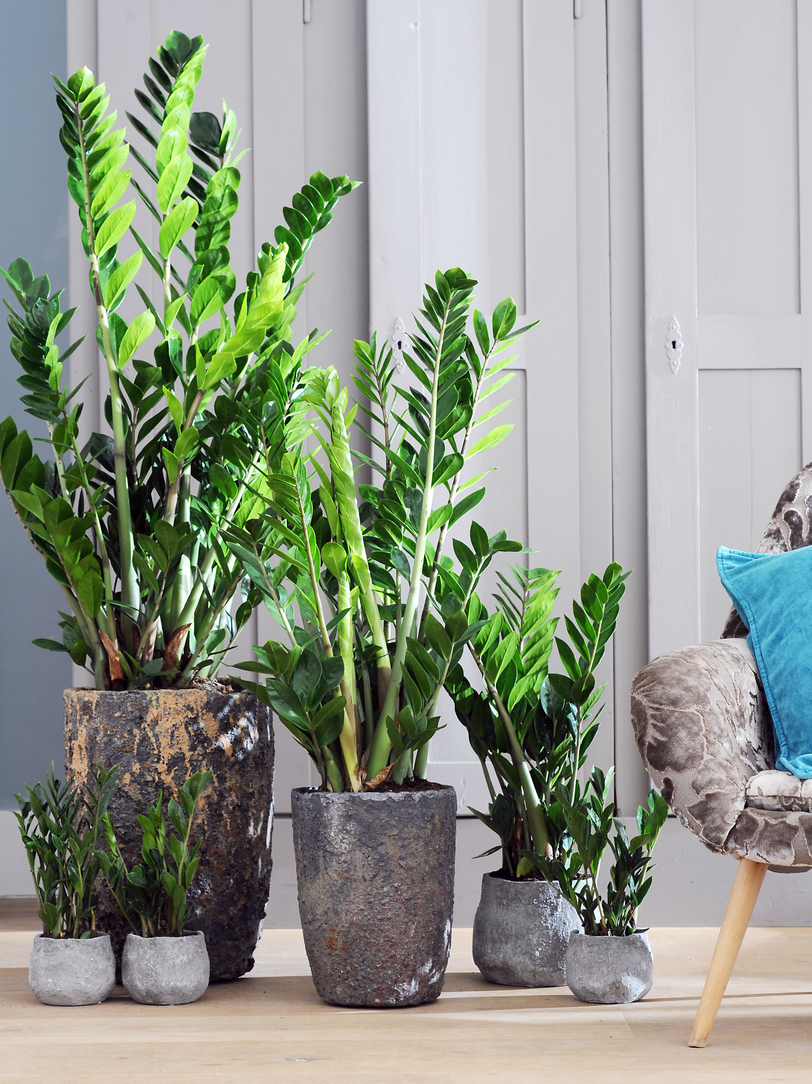 D perfecte pot voor je plant mooi wat planten doen for Grote kamerplanten