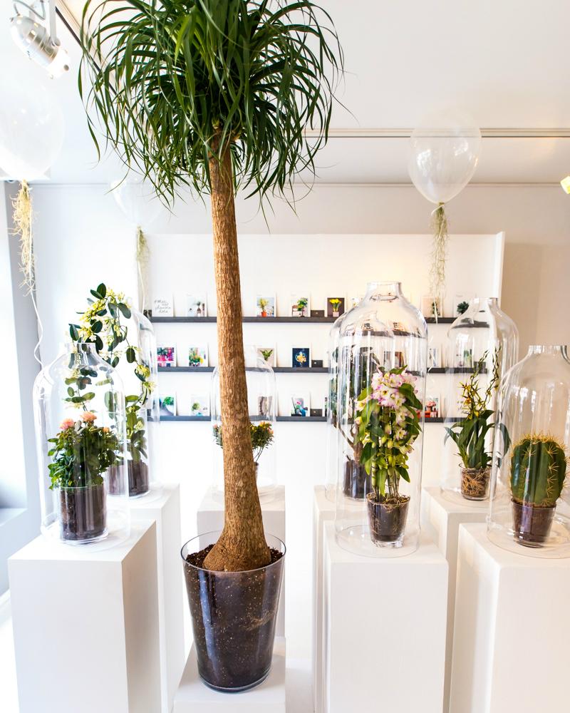 The plant agency mooi wat planten doen - Blauwe agency ...