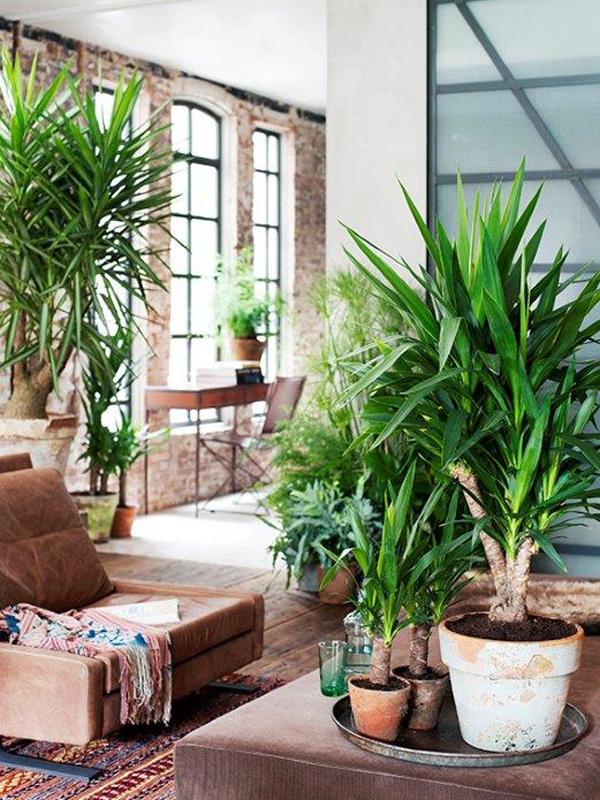 yucca mooi wat planten doen. Black Bedroom Furniture Sets. Home Design Ideas