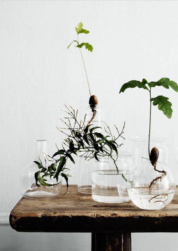 nieuw de indoor water luchttuin mooi wat planten doen