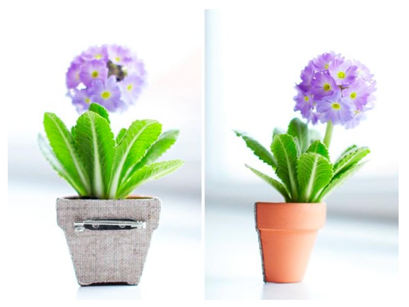 Maak een originele corsage met een miniprimula Mooiwatplantendoen.nl