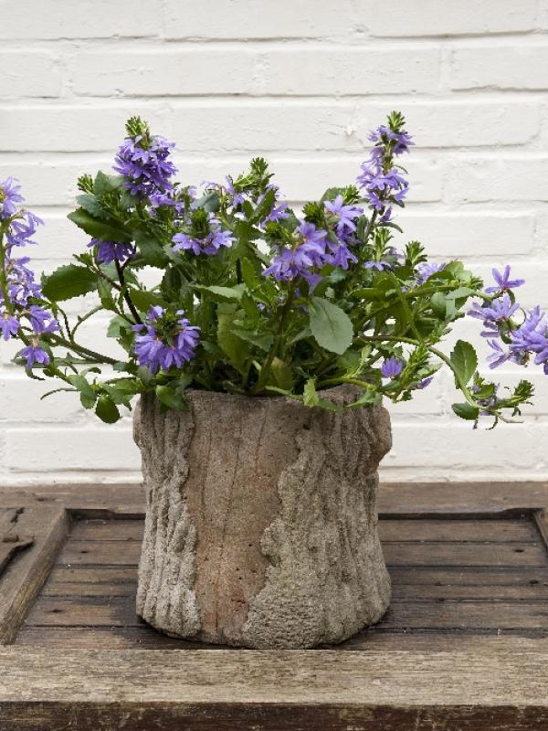 Scaevola mooi wat planten doen - Terras rand idee ...