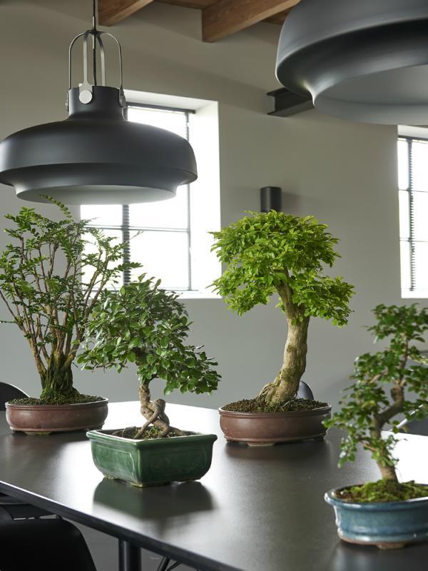Bonsai Mooiwatplantendoen.nl