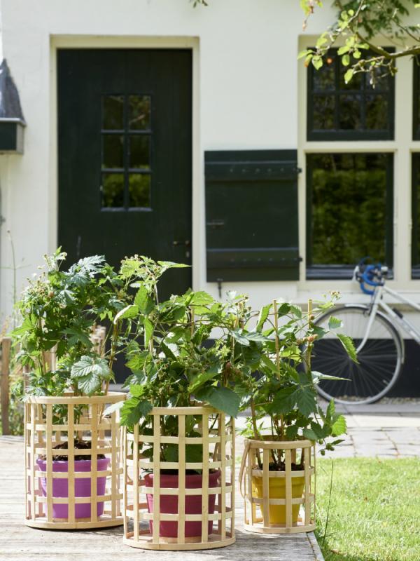 Braam Mooiwatplantendoen.nl