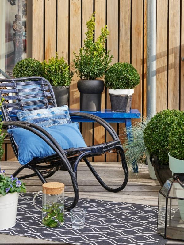 Buxus - Mooiwatplantendoen.nl