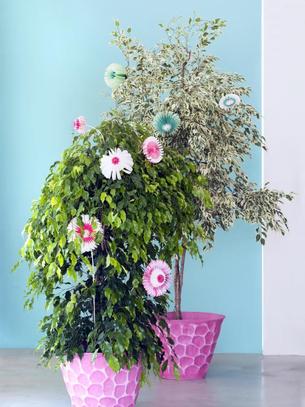 Ficus: groene remedie tegen de januari-blues Mooiwatplantendoen.nl