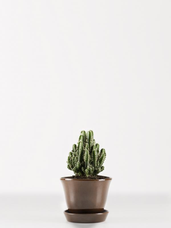 Zuilcactus Mooiwatplantendoen.nl