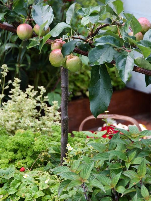 Fruitboom - Mooiwatplantendoen.nl