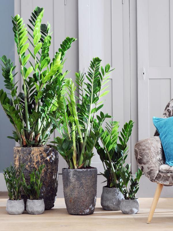 Kamerplant Hoge Pot.De Perfecte Pot Voor Je Plant Mooi Wat Planten Doen