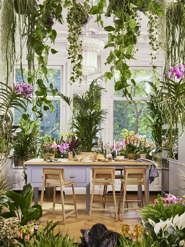 orchidee-actie albert heijn mooiwatplantendoen.nl