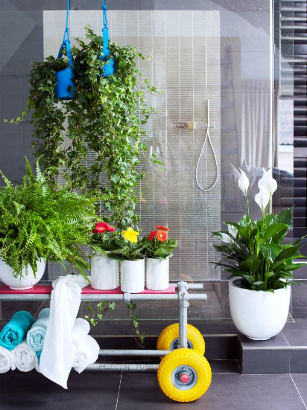 klimop, gerbera, krulvaren en Spatiphyllum - planten in je badkamer - Mooiwatplantendoen.nl