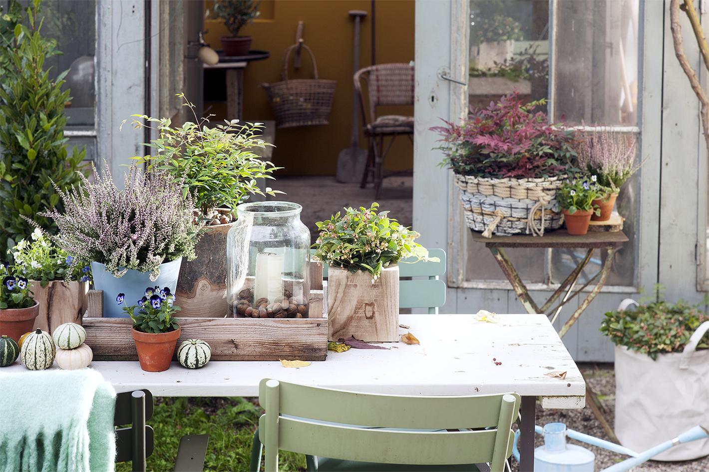 Herfstfeestje op je tuintafel terras mooi wat planten doen for Herfst decoratie